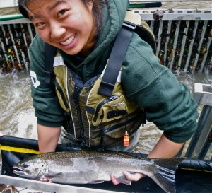 Monitoring adult Coho salmon in the Russian River watershed in California.