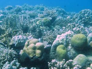 Caridad reef, Bay Bay, Leyte